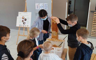Atelier récolte de miel – conseil municipal jeunes
